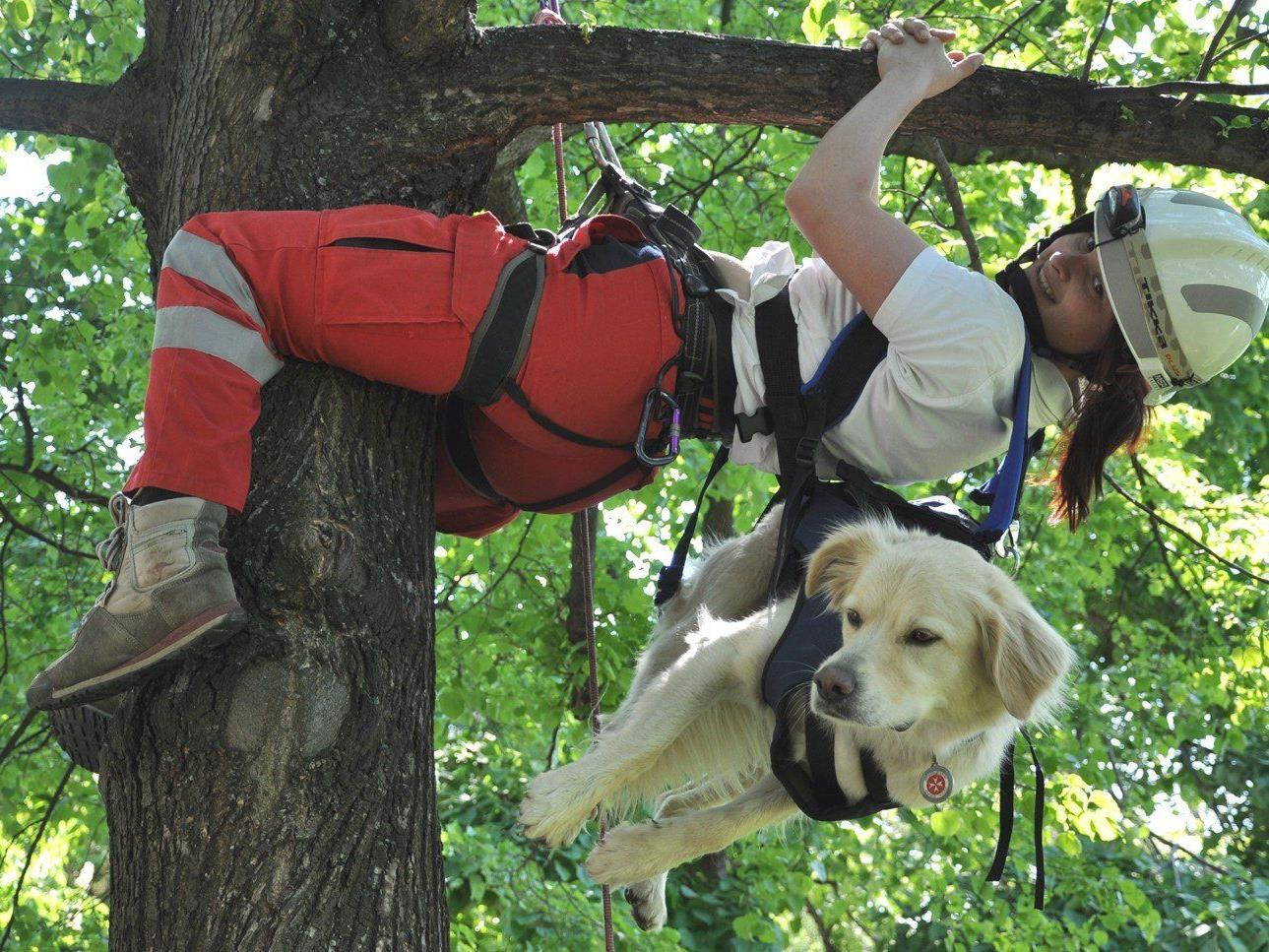"""Am """"Tag der Rettungshunde"""" wird eine besondere Einsatzübung in Theresienfeld stattfinden."""