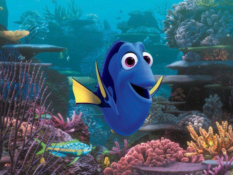 Blauer Doktorfisch im Mittelpunkt des zweiten Teils.