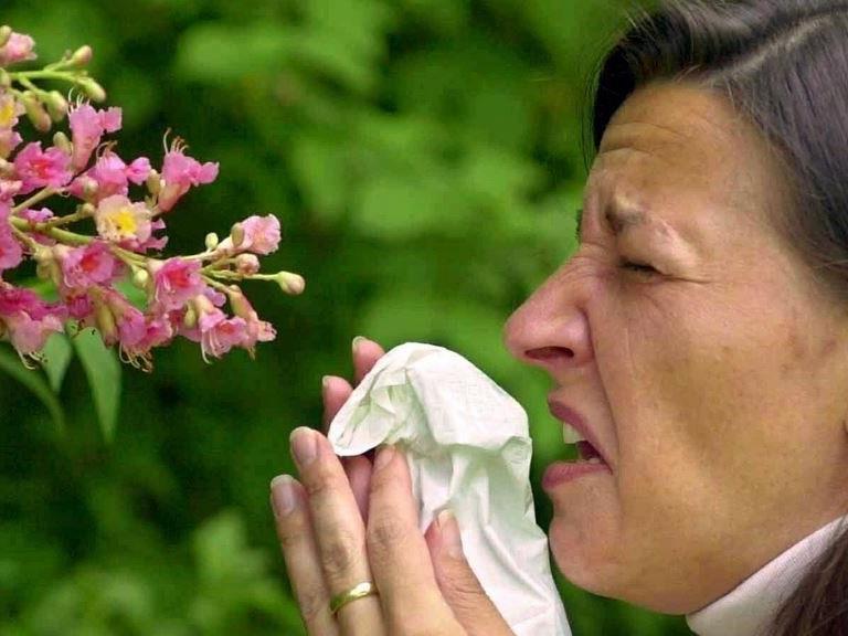 Die Pollen-Saison beginnt - eine Belastung für Allergiker.