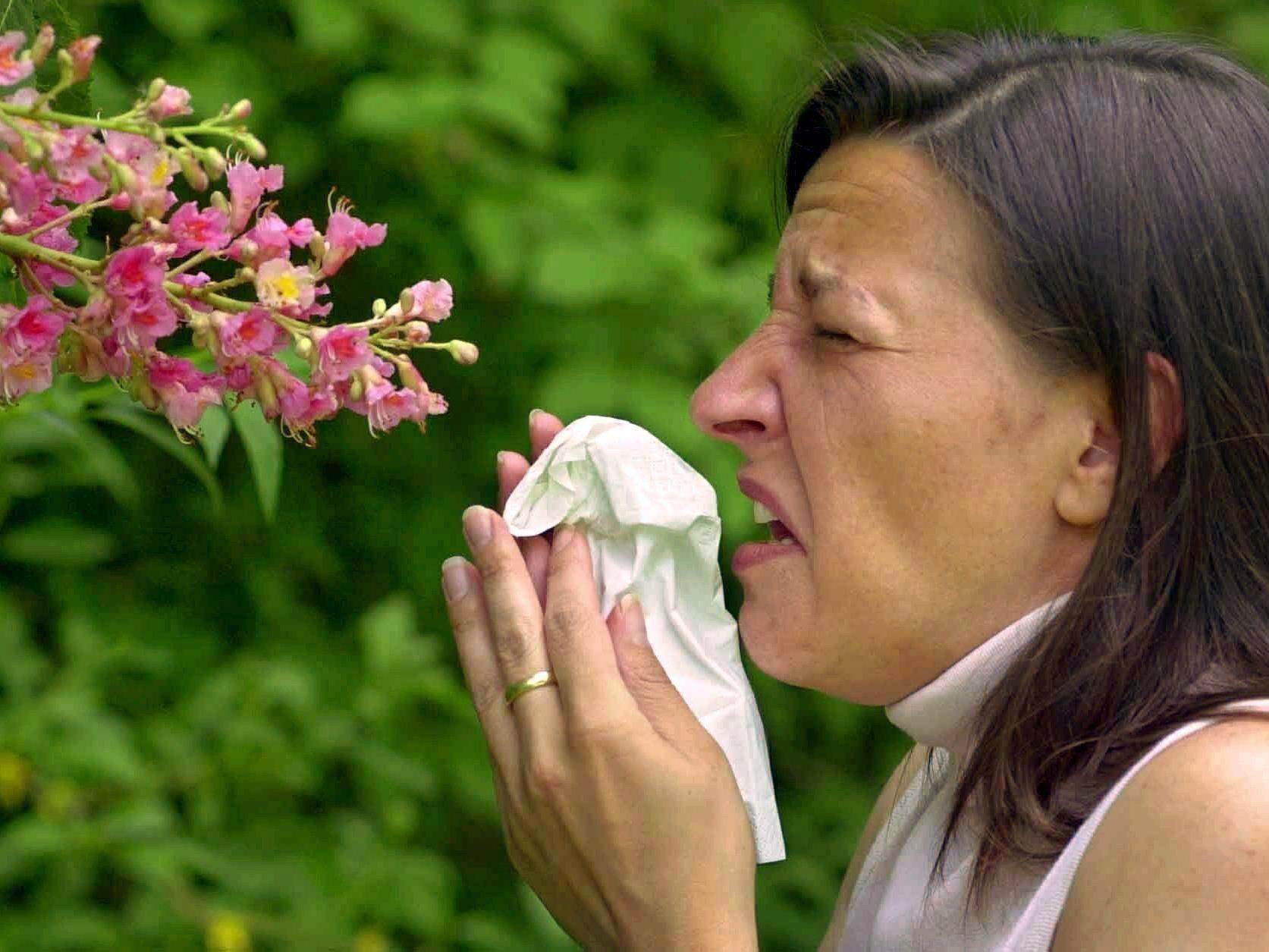 Bei plötzlich steigenden Temperaturen höhere Pollen-Belastungen.