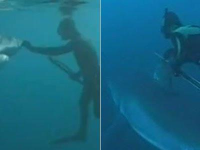 """""""Sharkman"""" Michael Rutzen hat gelernt, über die Körpersprache mit dem Weißen Hai zu kommunizieren."""