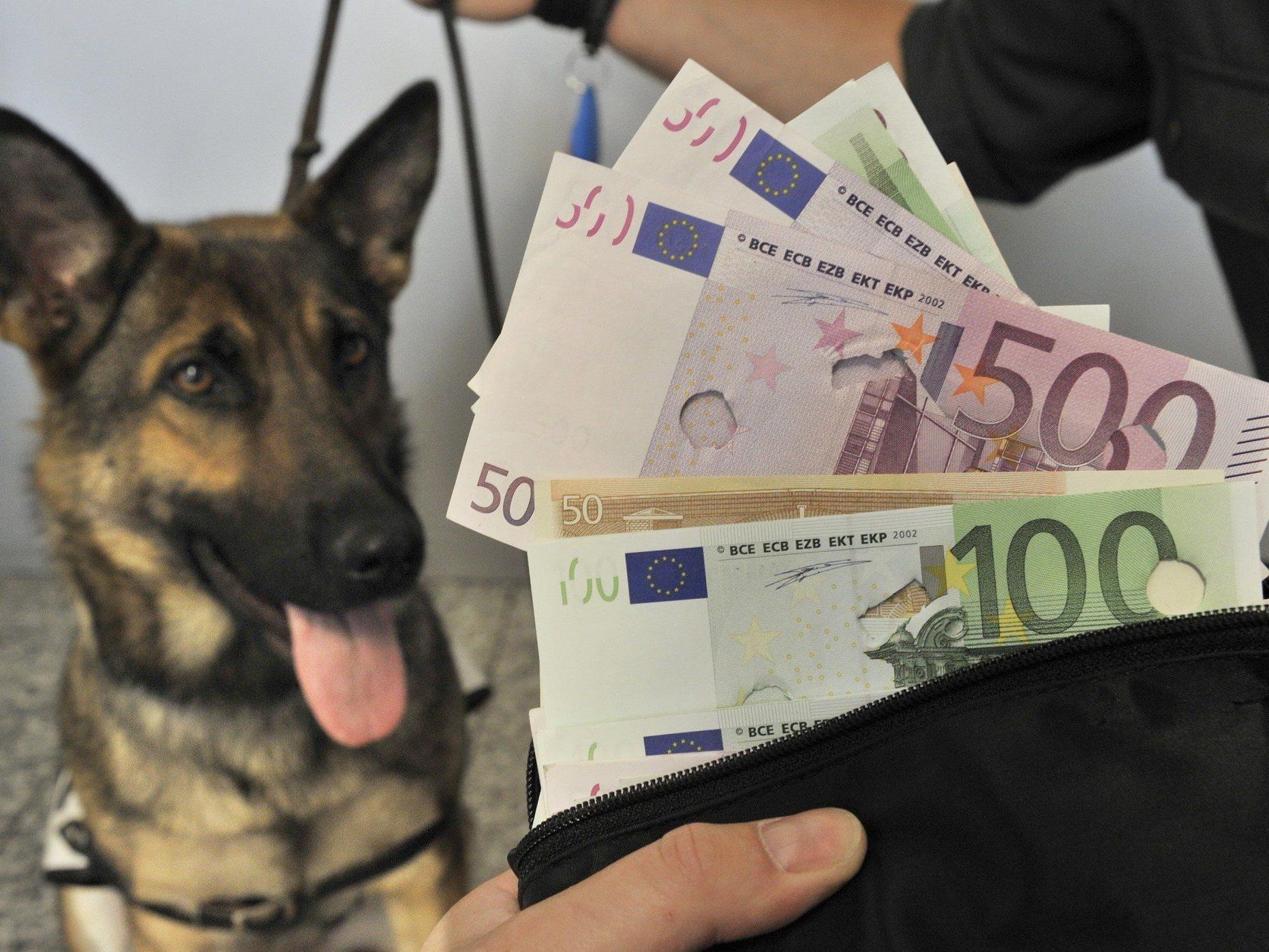 Bargeldspürhund im Einsatz - Vorarlberger Zoll erwischte Österreicher mit 220.000 Euro im Handschuhfach.