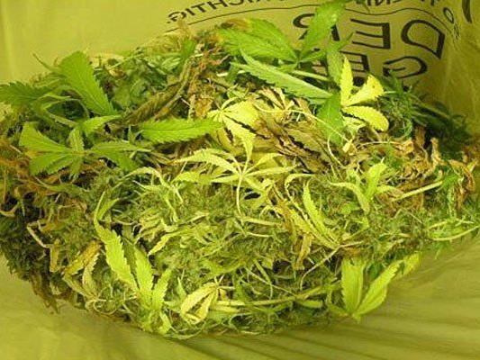 Diese Cannabis-Indoorplantage fand man in einem Küchenschrank in Korneuburg