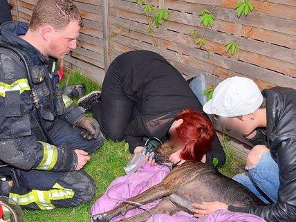 Feuerwehr rettete einen Hund vor den Flammen