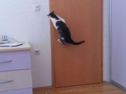 Hangover: Dieser Katzencoup kann sich sehen lassen.