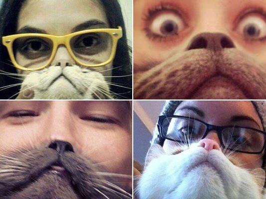 Katze als Bart geistert durchs Internet - auch erste Hundebesitzer wittern ihr Anrecht auf Unsinn.