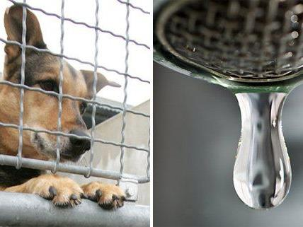 Wasser- und Tierschutz werden in die österreichische Verfassung aufgenommen.