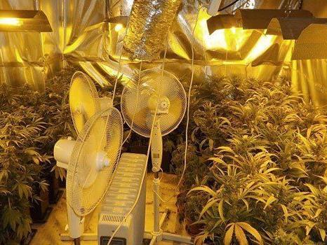 Die Bande baute auch Cannabis an.