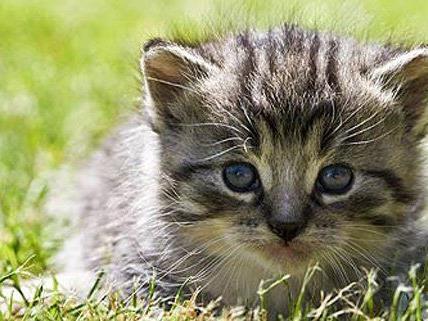 In Wien wurde ein neues Streunerkatzenprojekt ins Leben gerufen.