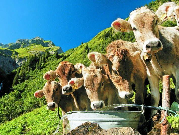 Keine Sanktionen gibt es, wenn die Alpflächen gemeinsam von Bauer, Landwirtschaftskammer und AMA erhoben werden.