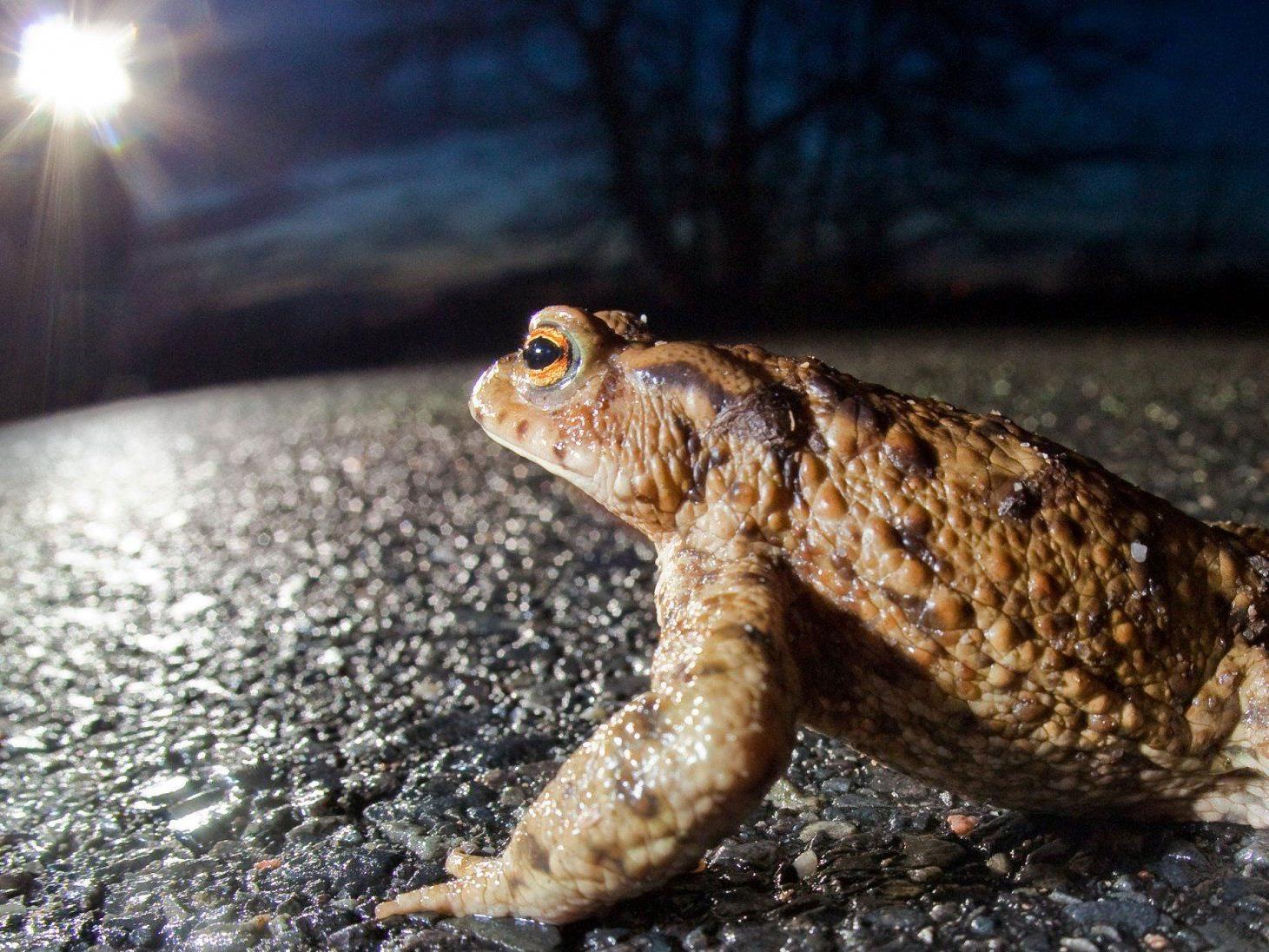 Auch streng geschützte Tiere verenden auf heimischen Straßen.