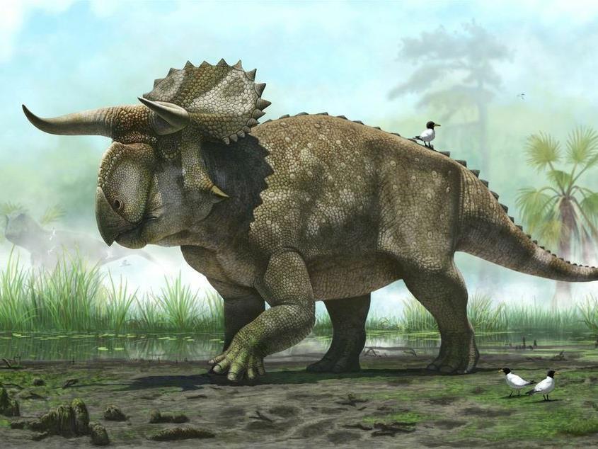 Neu entdeckter Horn-Dino hatte Maul in Form eines riesigen gekrümmten Schnabels.