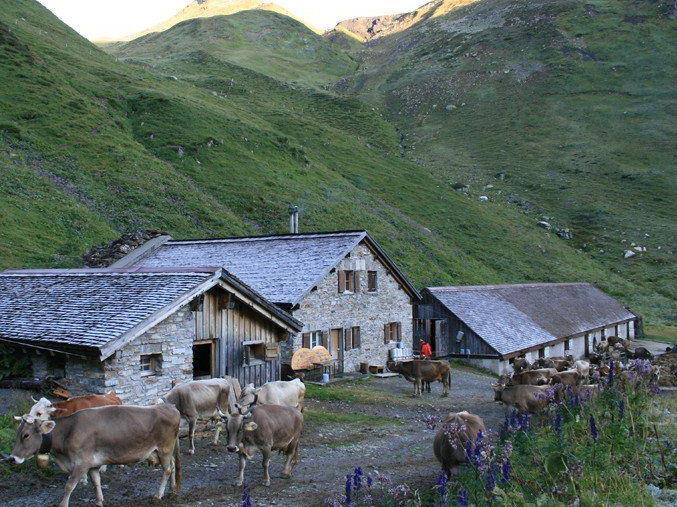 Fortschritte in der Alpflächendiskussion.