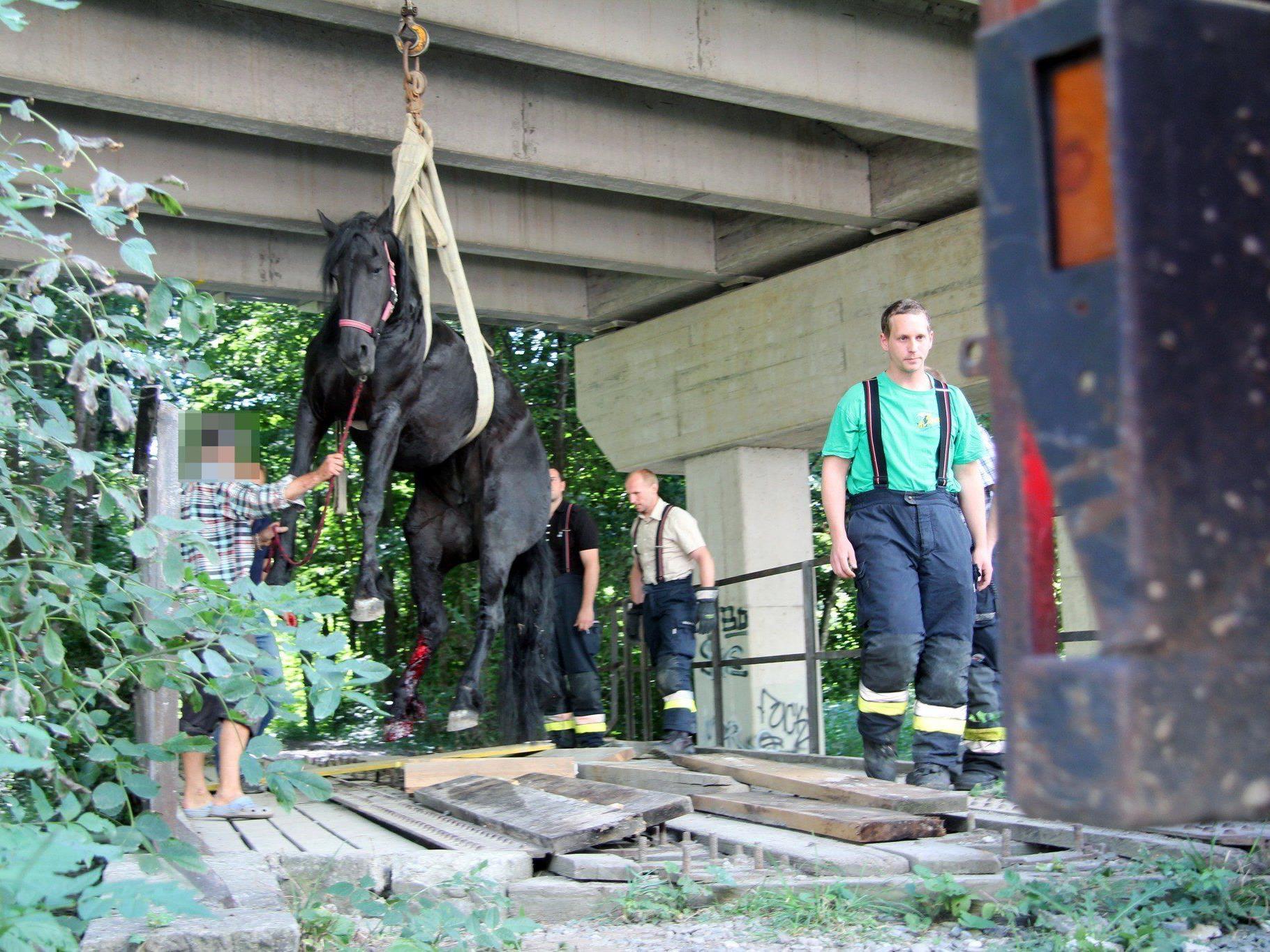 Die Feuerwehr barg das Pferd mit einem mobilen Kran aus seiner misslichen Lage.