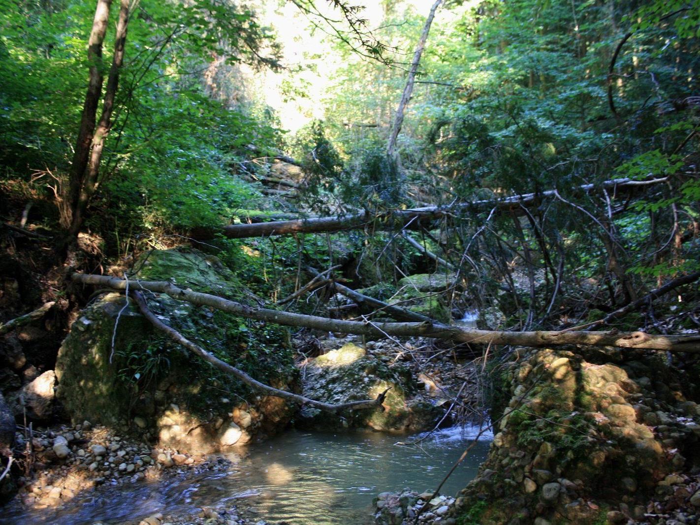 Zahlreiche entwurzelte Bäume und das Totholz im Bachbett sowie Bäume im Nahbereich des Klausmühlebaches müssen entfernt werden.