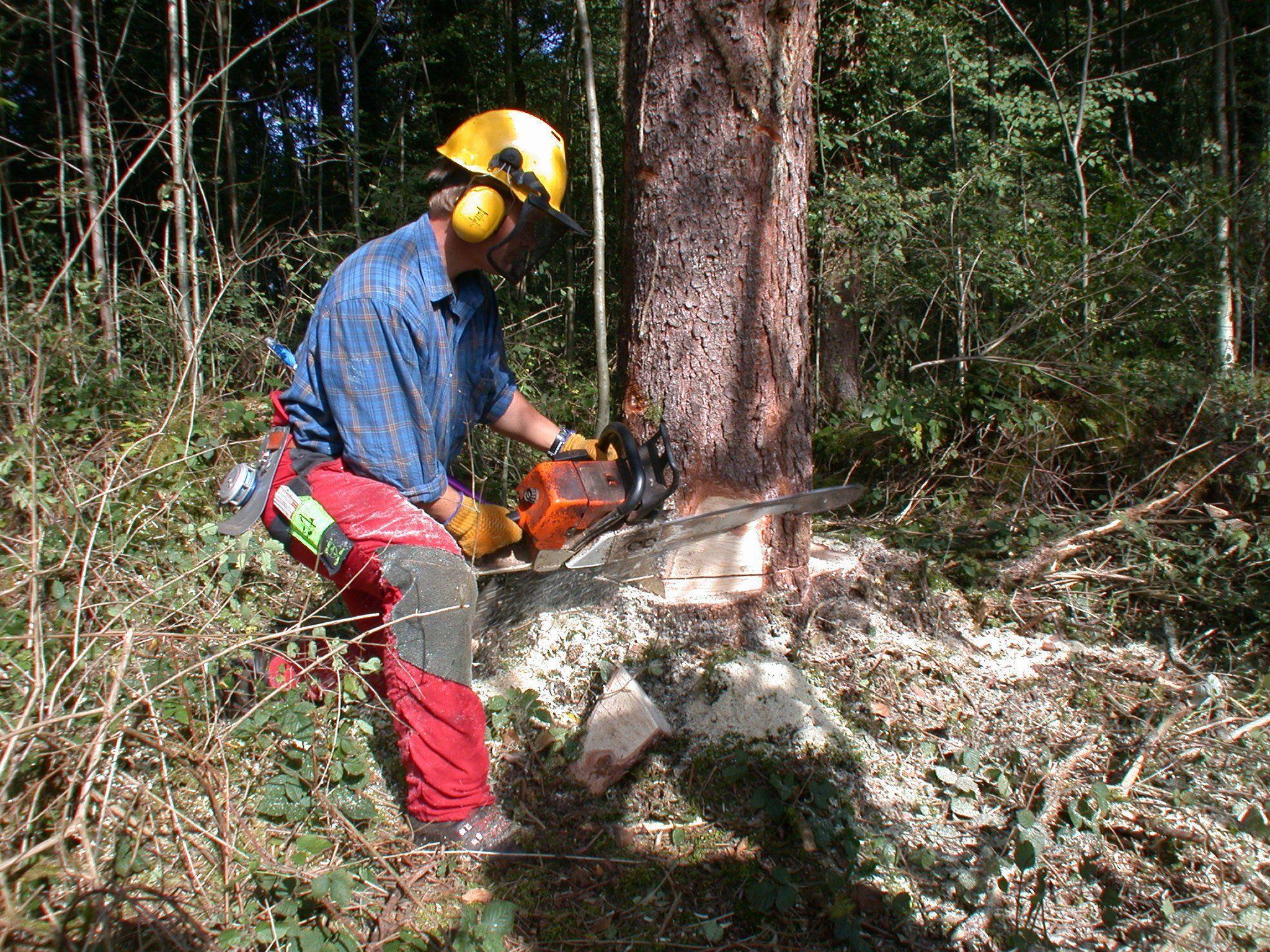 Viele betreiben das Holzen sogar als Hobby.