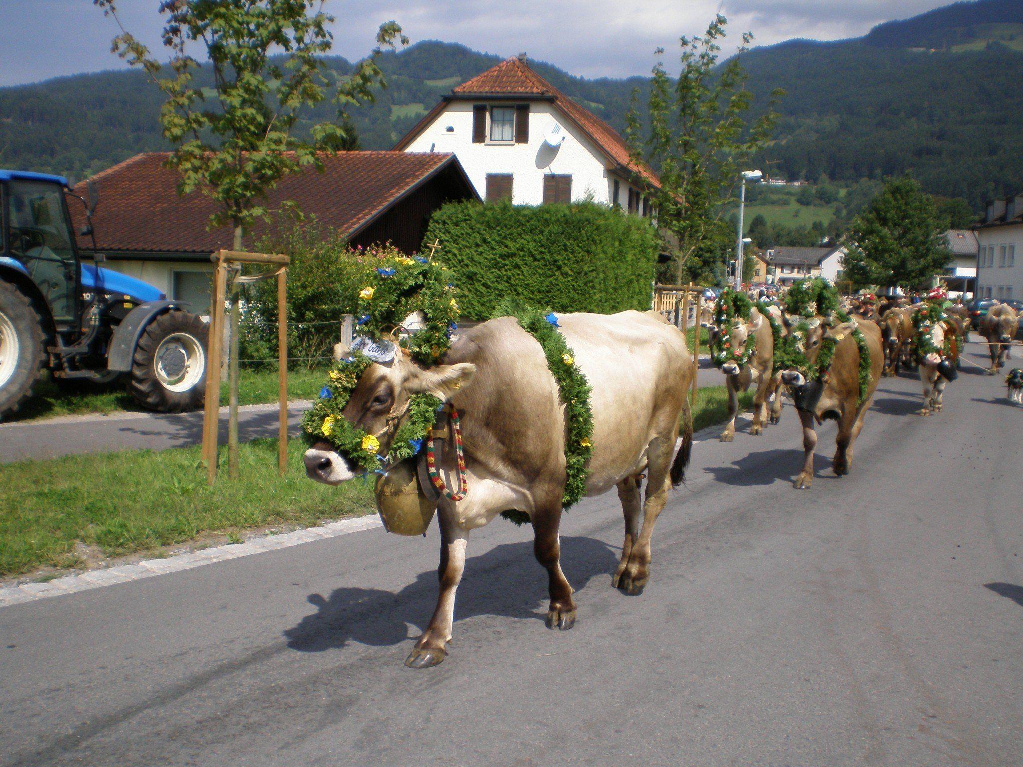 Alpabfahrt der Kühe in Satteins am 7. September 2013.