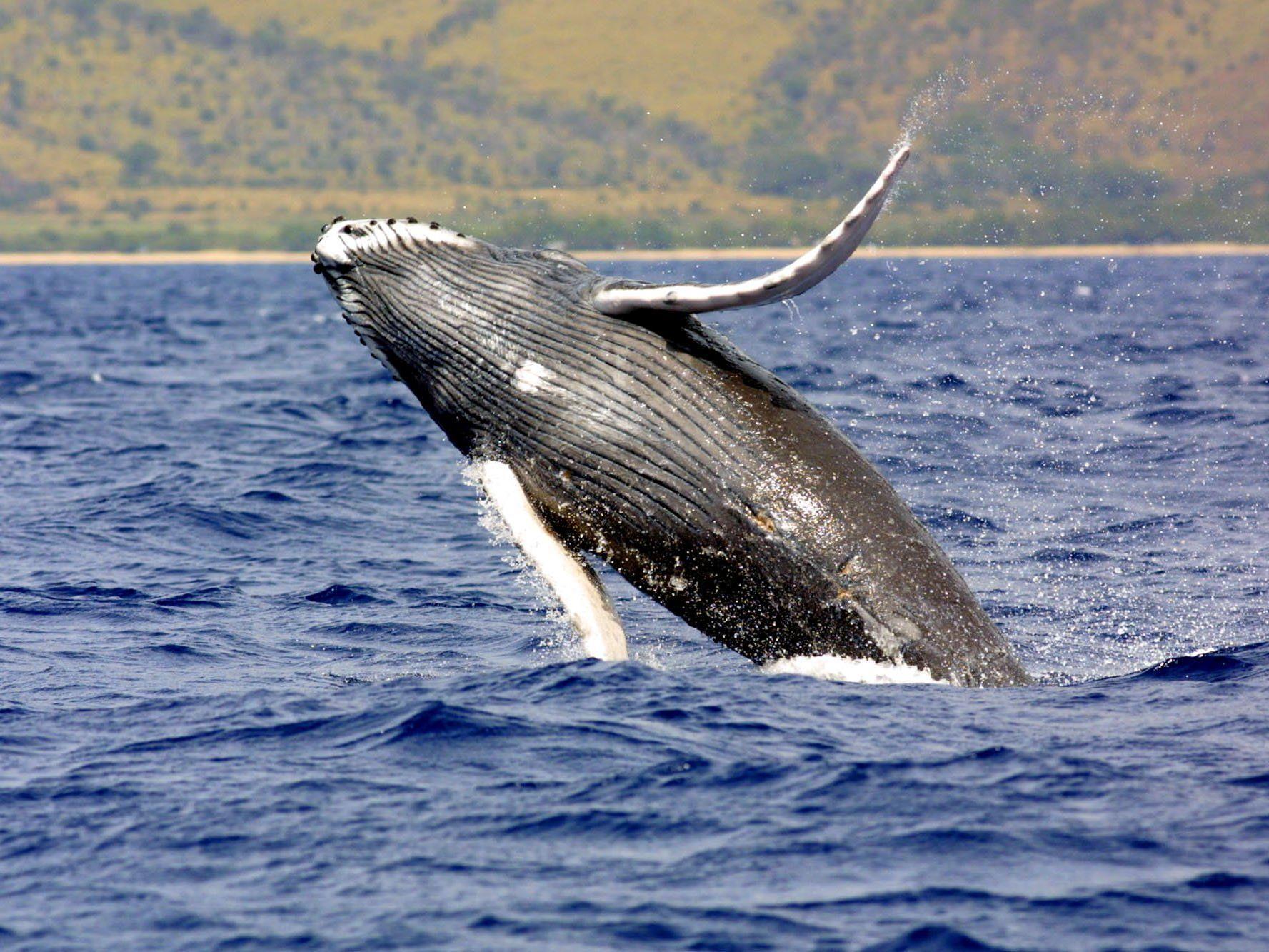 In Ghana wurden fünf tote Wale an den Strand geschwemmt.