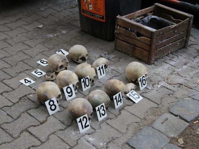 Menschliche Schädel mit Inventarnummern versehen.
