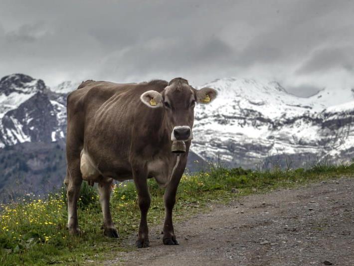 Auf dem Hochjochgebirge in Schruns hat es bereits geschneit.