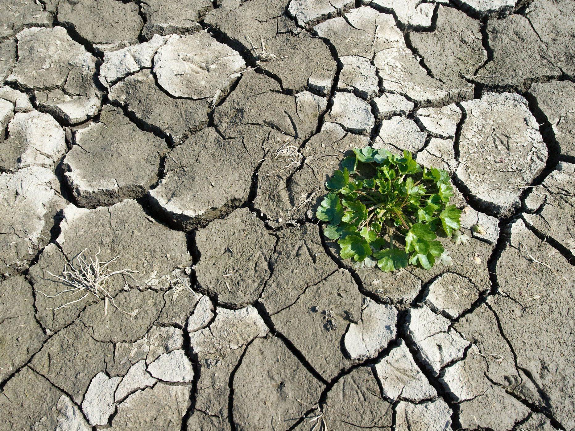 Dürren, Überschwemmungen: Grüne warnen.