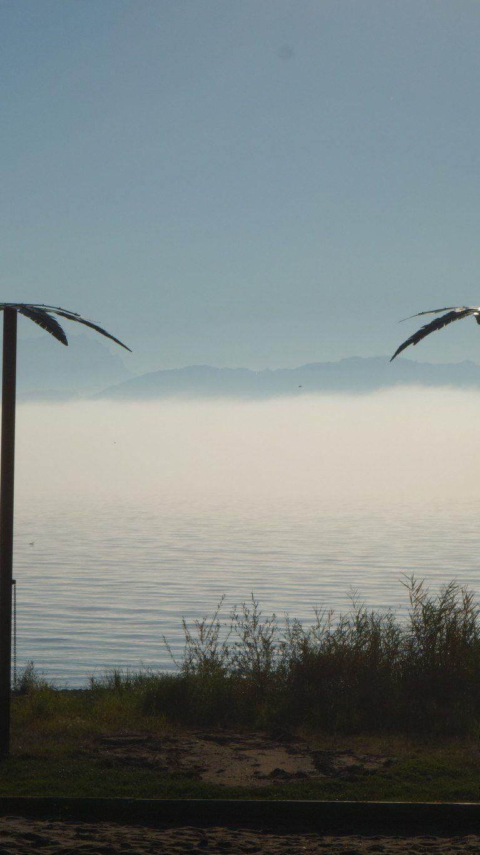 Palmen überm Nebel