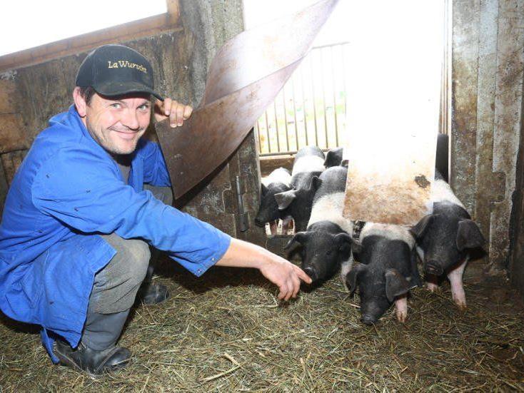 Hereinspaziert, ihr lieben Ferkel: Peter Gmeiner nimmt die jungen Schweine, die gerade vom Ausgang zurückkommen, in Empfang.