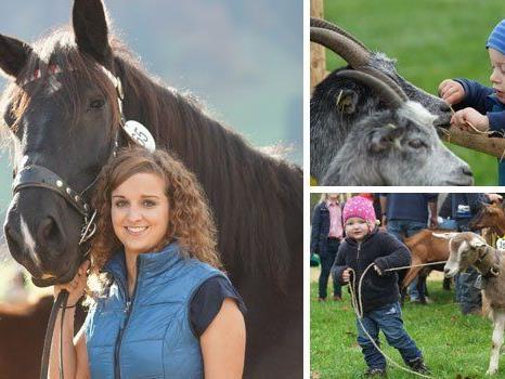 Große Pferde und süße Ziegen sorgen in Andelsbuch jedes Jahr für leuchtende (Kinder-)Augen.
