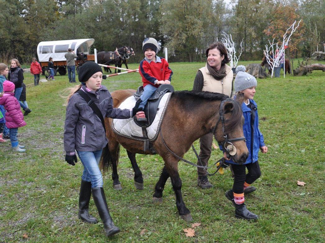 Pferdefest am Nationalfeiertag, 26.Oktober auf der Reitanlage des Reitclub Wildfang in Klaus ab 10 Uhr.