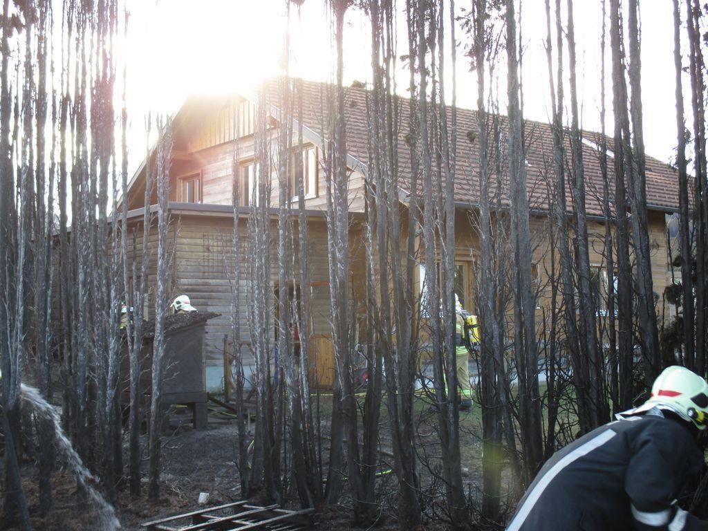 Thujenhecke in Höchst in Brand geraten