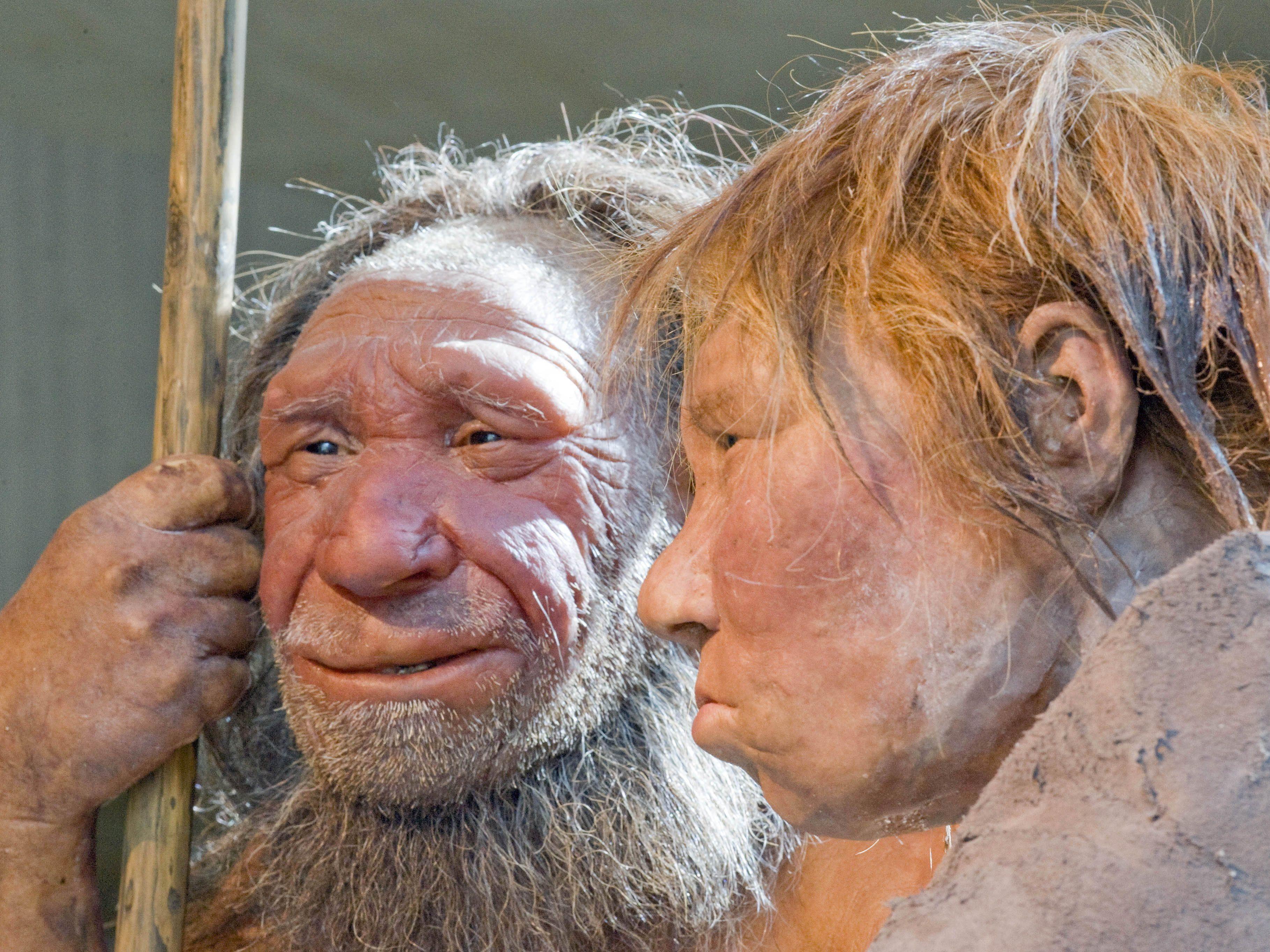 Rekonstruktion eines Neandertaler-Paares im Neandertal-Museum im deutschen Mettmann.