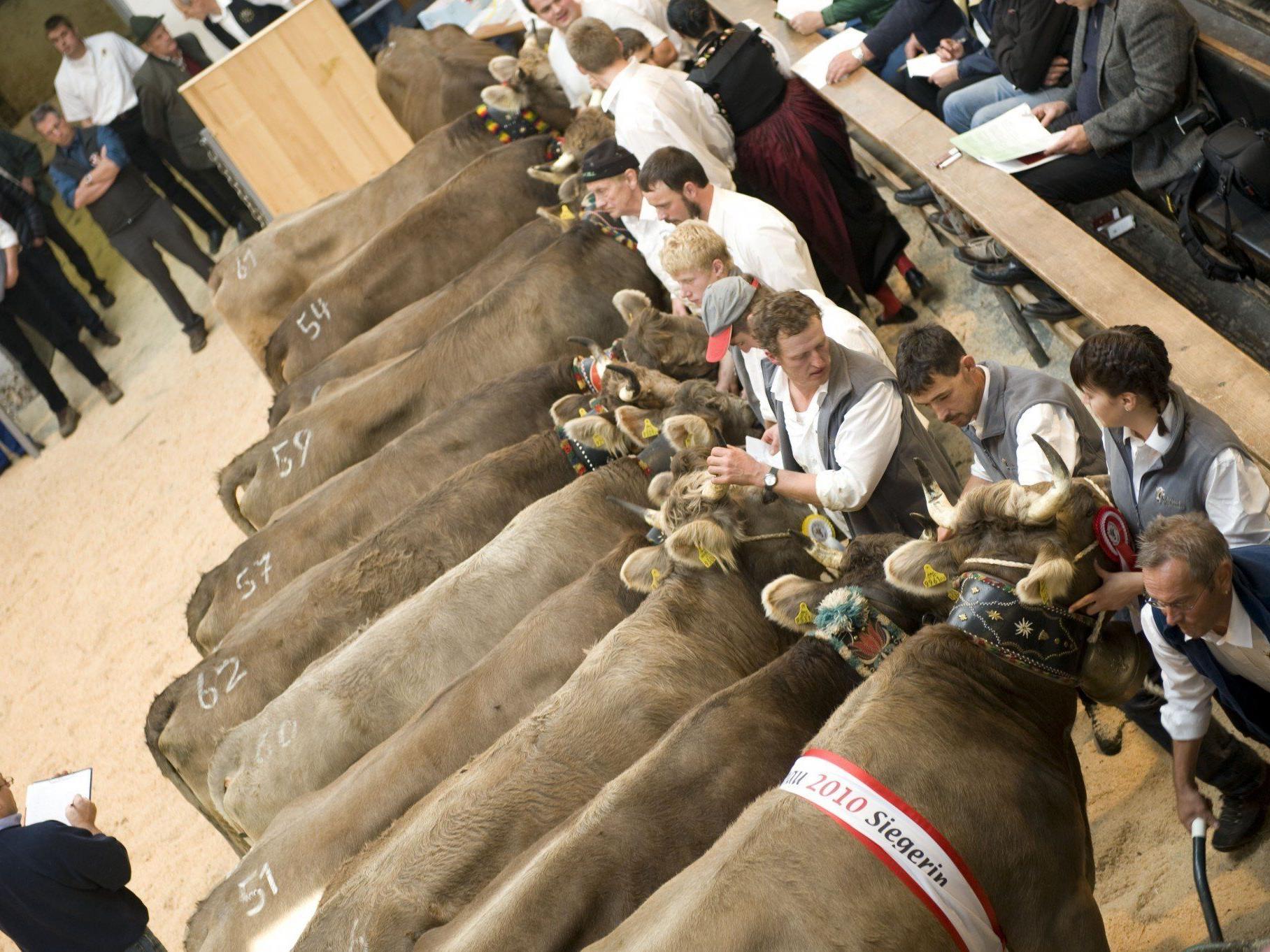 Viehversteigerungen in Dornbirn. Eine offene Rechnung sorgt für Unruhe hinter den Kulissen.