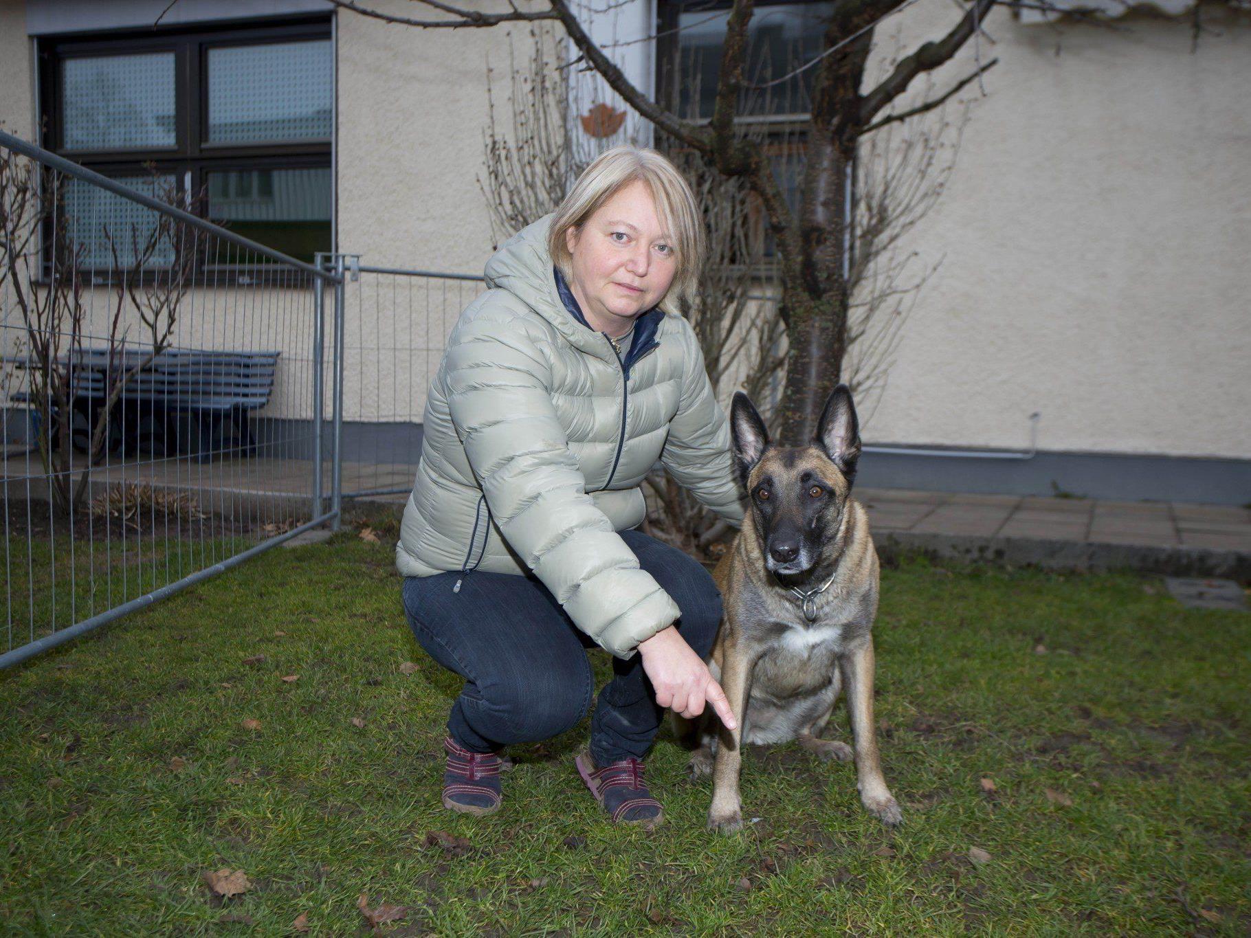 Schüblingstücke mit Nadeln präpariert: Hund Danou wäre beinahe Opfer eines heimtückischen Tierquälers geworden.