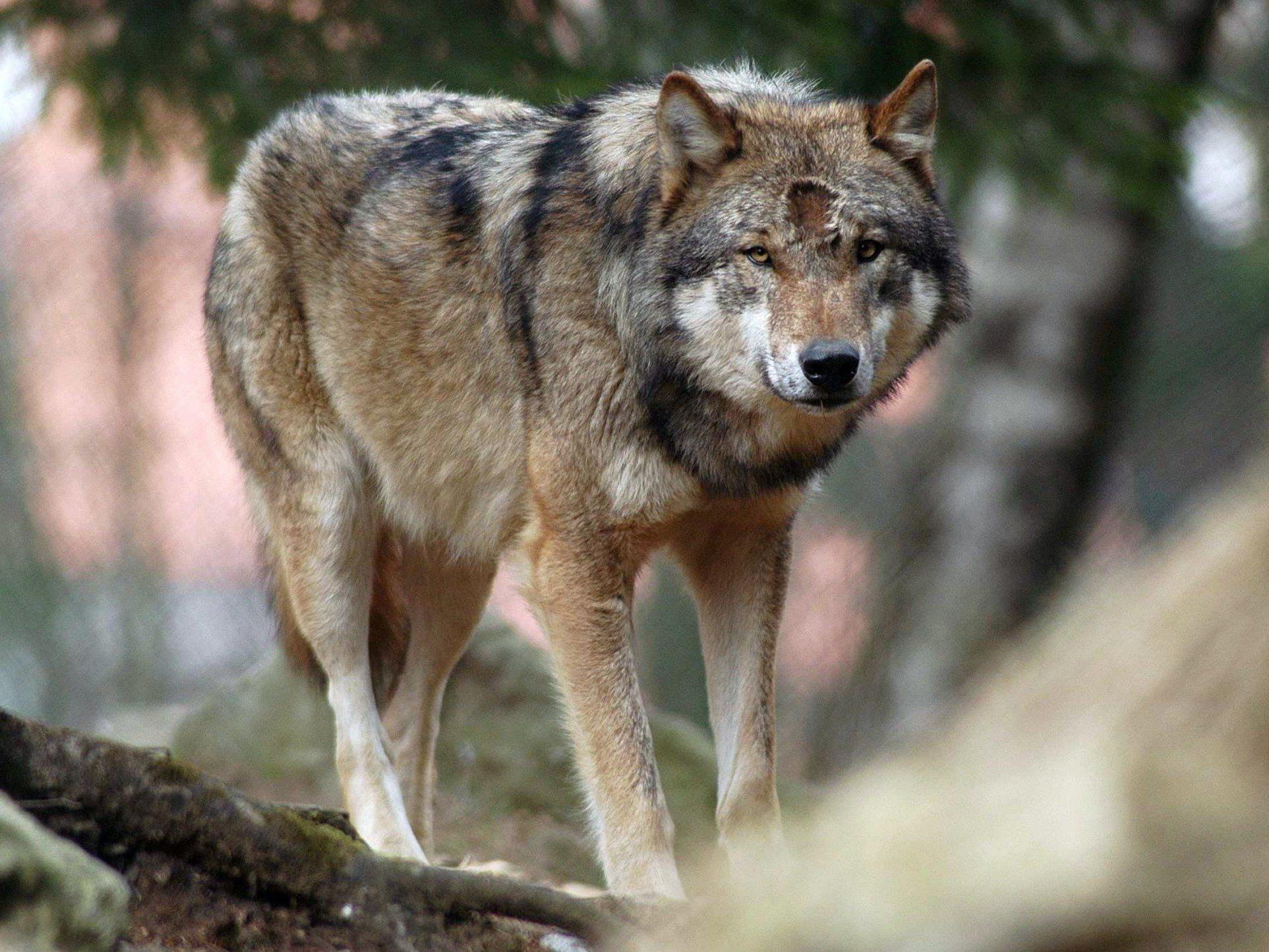 Tierschützer bitten um Hinweise auf unbekannten Schützen