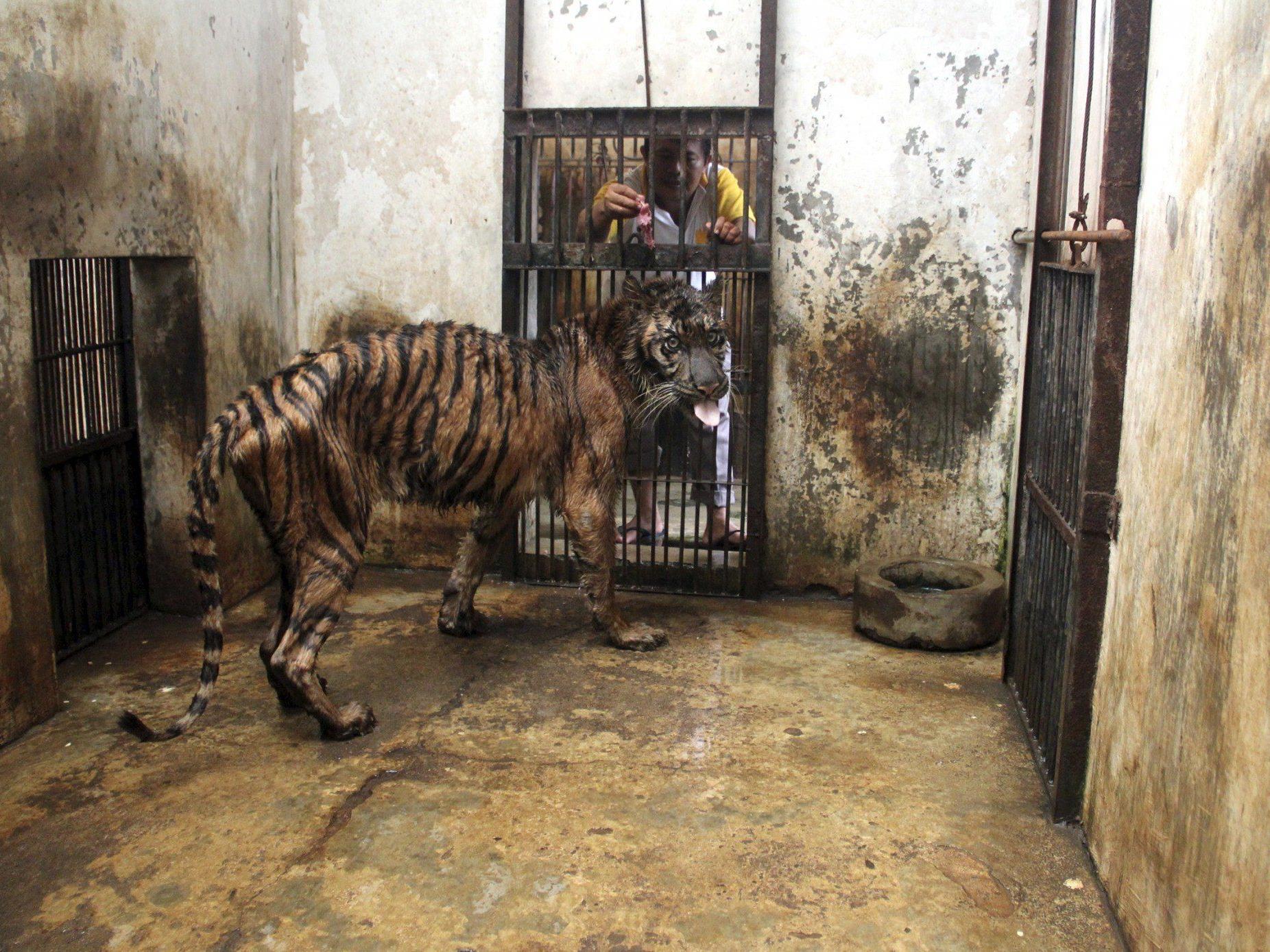 Kranke, unterernährte und verwahrloste Tiere - Tierschützer vermuten Verwaltungschaos und Korruption.