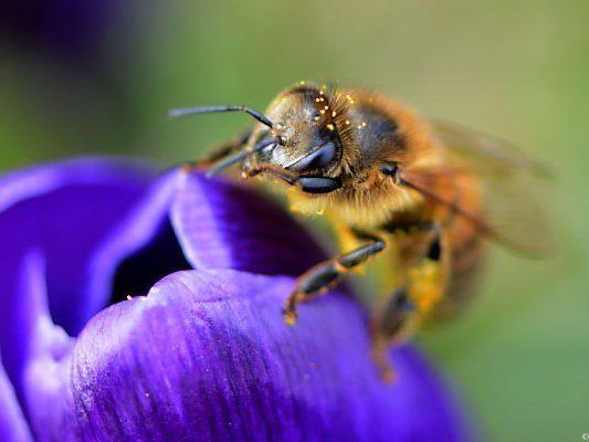 Zahl der Bienenvölker soll erhöht werden