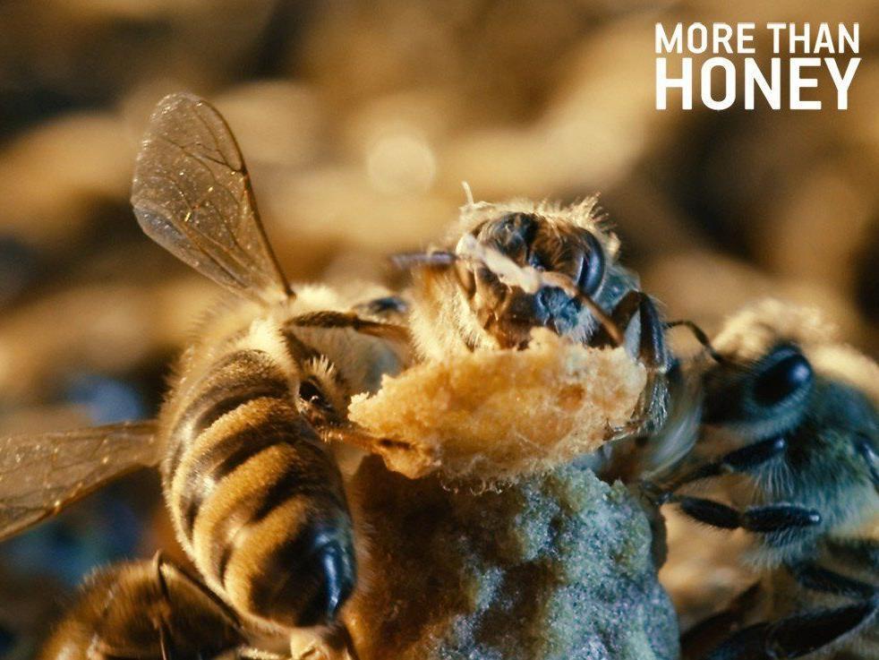Mehr als ein Drittel unserer Nahrungsmittel ist abhängig von der Bestäubung durch Bienen.