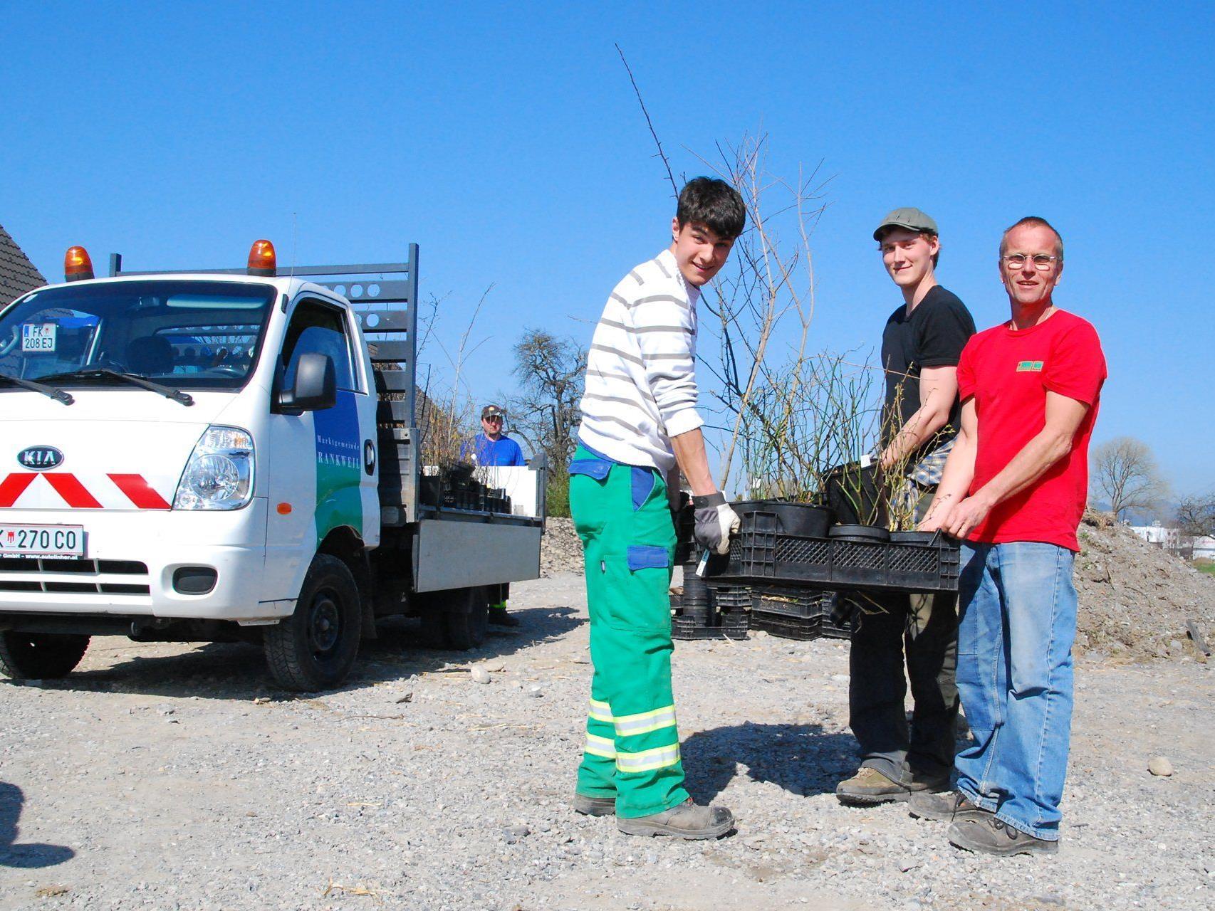 Unter der Leitung von Dr. Reinhard Witt pflanzt der Bauhof Rankweil an die 3000 Gewächse
