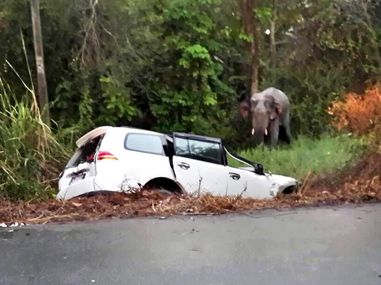 Sechs Menschen und ein Elefant starben bei dem Verkehrsunfall.