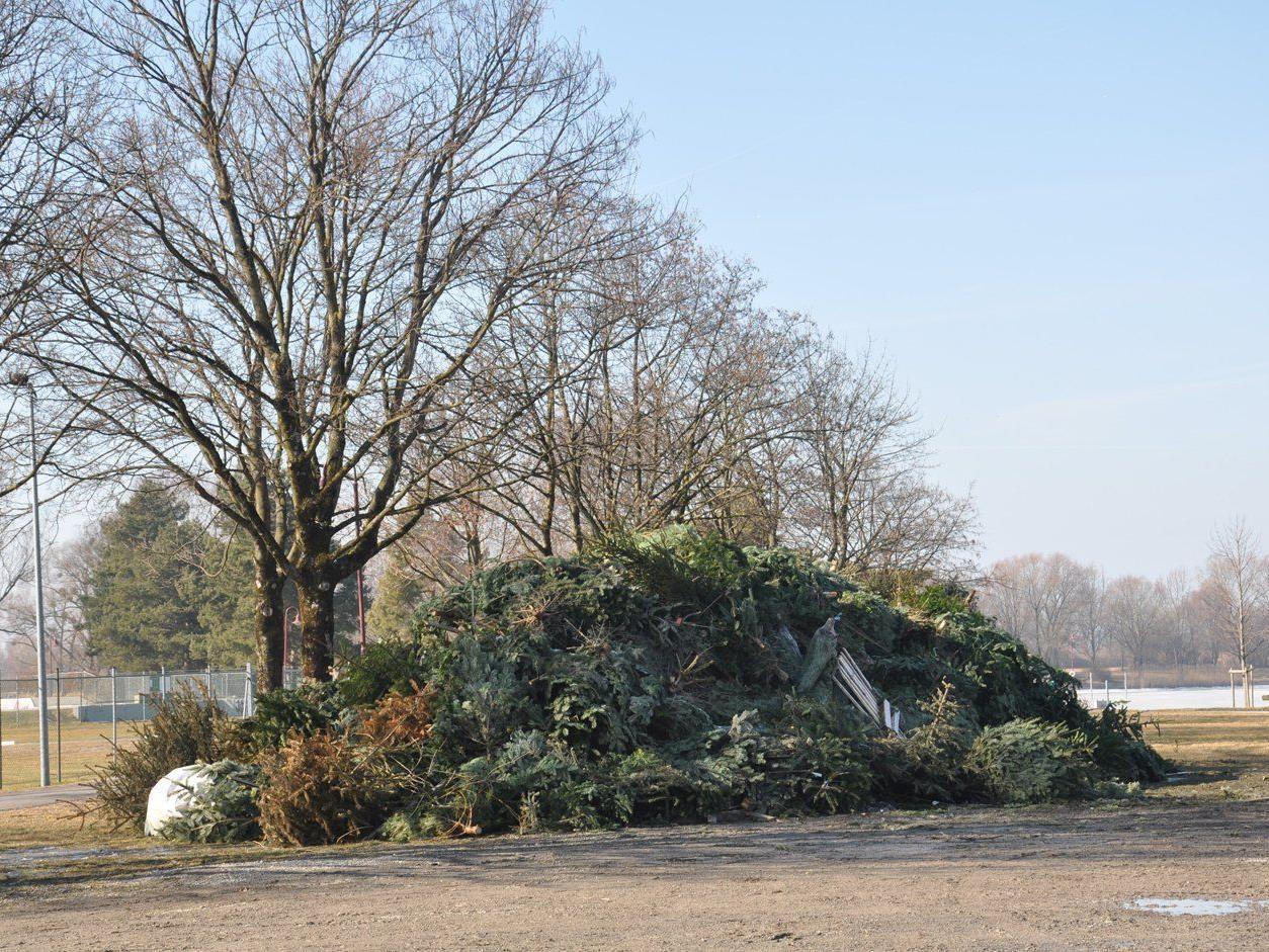 Ab Donnerstag können Christbäume u.a. Funkenbaumaterial beim Stedepark abgegeben werden.