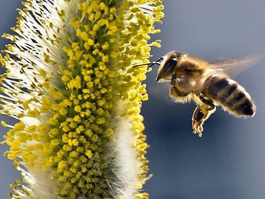 Presserunde zum Thema Bienensterben