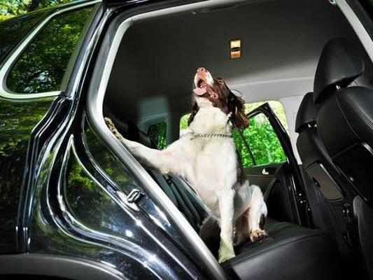 """""""Junior van de Engelse"""" war der erste Geldschnüffelhund der Schweiz."""