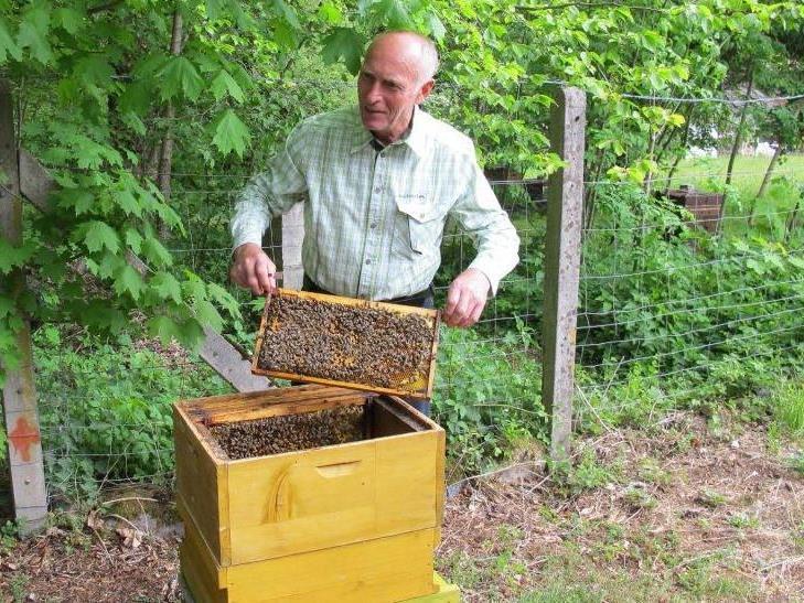 Rund um die Bienen gibt es viel zu berichten.