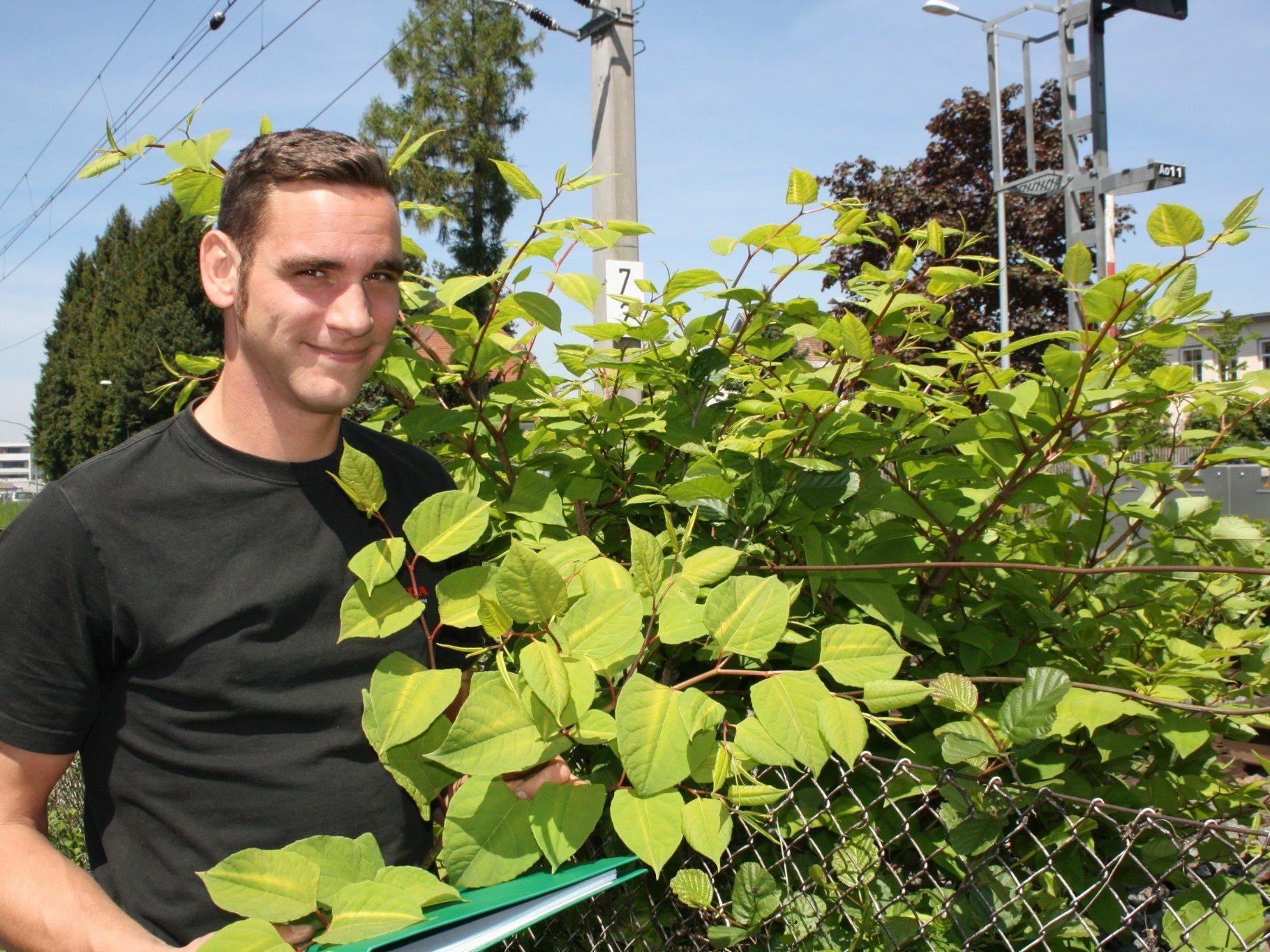 Landschaftsgärtner Michael Sinz vom Wirtschaftshof will im Kampf gegen die Neophyten (Japan-Knöterich u.a.) Akzente setzen.