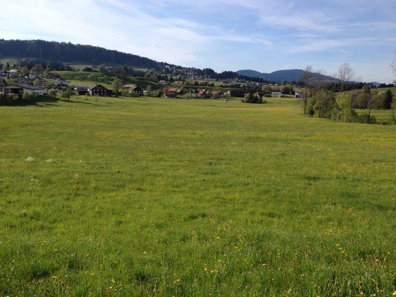 noch steht das Gras...