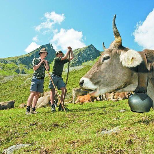 3500 landwirtschaftliche Betriebe erhalten knapp 90 Prozent der EU-Agrar-Subventionen.