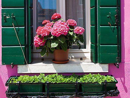 Wegen Haaren auf dem Fensterbrett warf der Angeklagte einen Blumenstock an die Tür seiner Nachbarn.