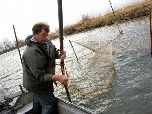 Die Bodenseefischer kämpfen weiterhin mit rückgängigen Fangzahlen.