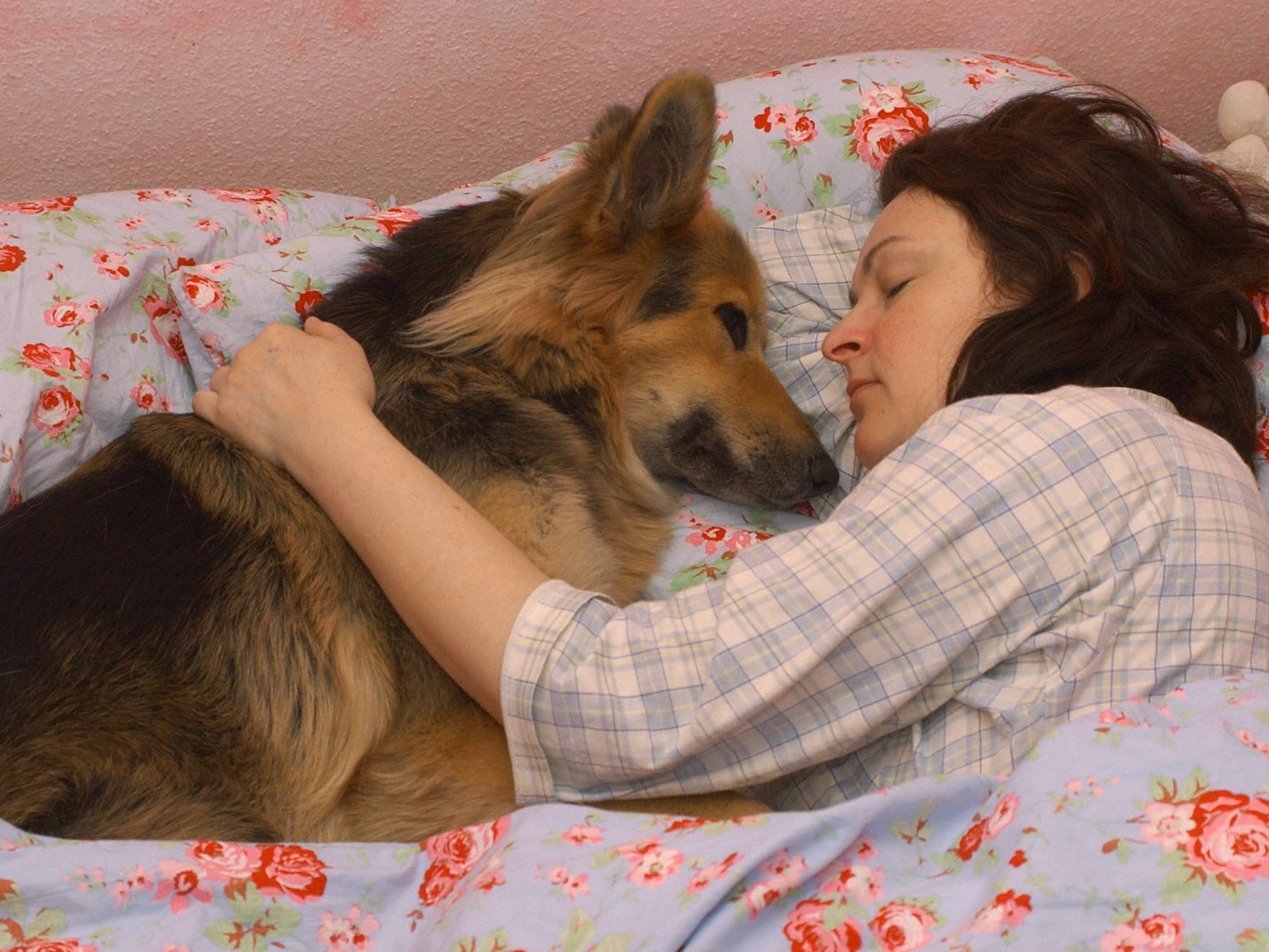 Der Hund baut eine besonders enge Beziehung zu Menschen auf.