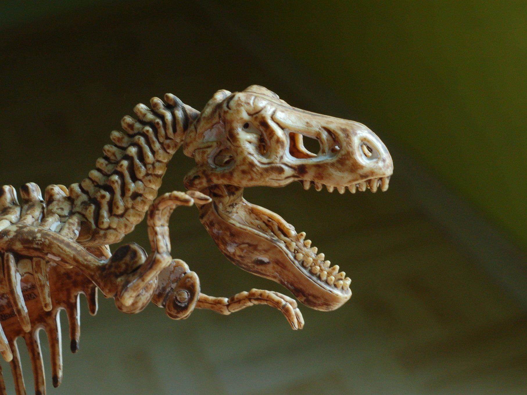 In Braunschweig wurde ein 180 Millionen Jahre altes Saurier-Skelett entdeckt.